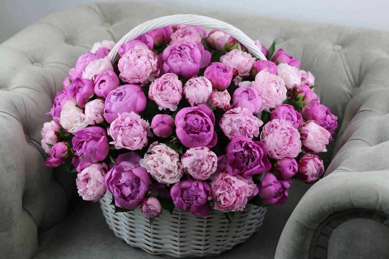 печать цветы пионы открытки красивые данном